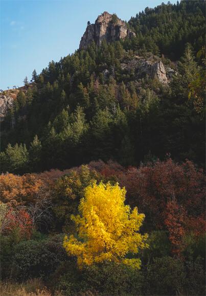 arbre-jaune